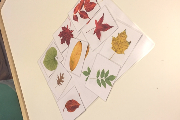 Leaf Matching Printable